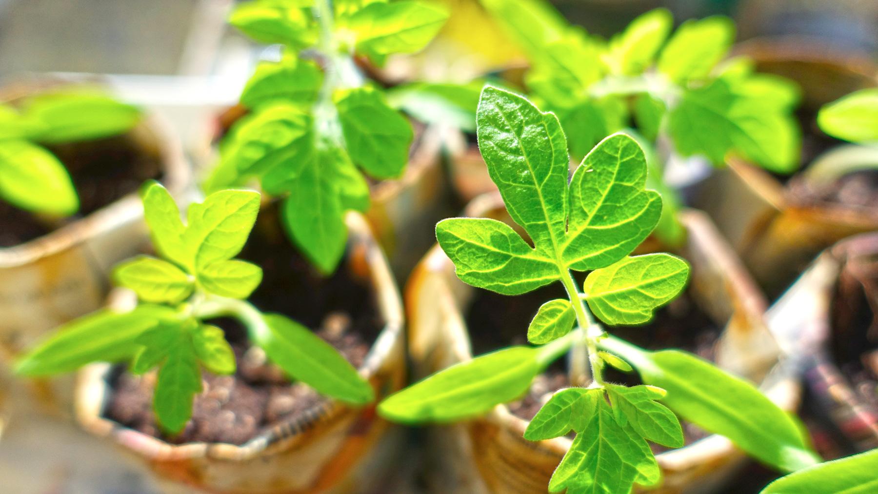 plant-999375